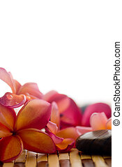 Frangipani and polished stone - Frangipani flower and...