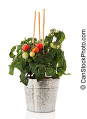 Plant with cherry tomatoes in sink pot