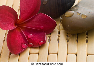 Frangipani on stones - Frangipani flower and polished stone...