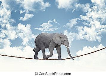 elephant on rope