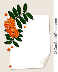 White paper sheet and ash berries. - White paper sheet with...