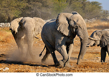 Elephant squabble, Etosha National park, Namibia - An...