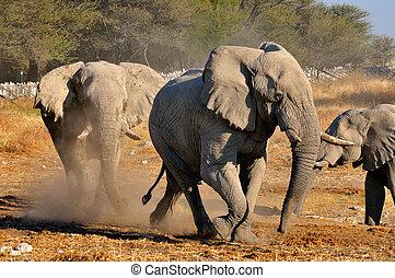 Elephant squabble, Etosha National park, Namibia - An...