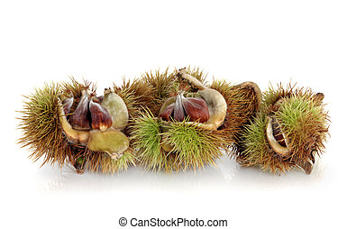 Beech Nuts - Beech nuts in spiky shell over white...