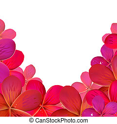 Pink Frangipani Frame, Isolated On White Background, Vector...