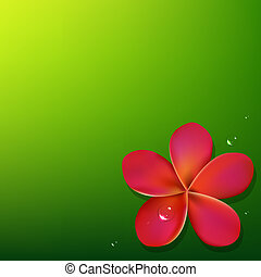Pink Frangipani With Green Background, Vector Illustration