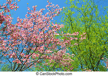 Colors of Spring - Colors of spring