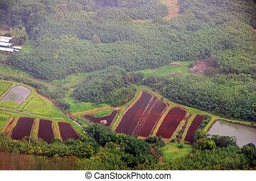 Aerial View Kauai