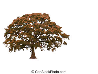 Abstract Oak Tree - Abstract illustration of an oak tree in...