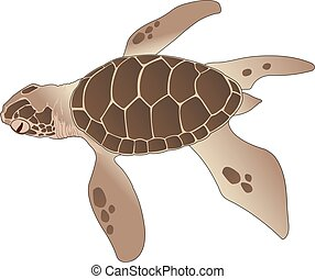 Sea Turtle, illustration - Sea Turtle, Brown, vector...