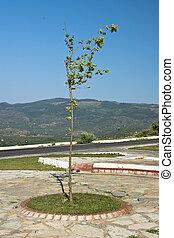 Tree near the road