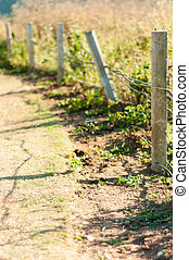 Barbed wire fence with grass