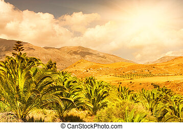 Beautiful landscape view to the palm grove with nice mountain perspective