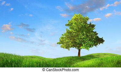 Tree on a lea, 3d animation against time-lapse sky...
