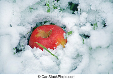 Red apple on snow - Beautiful red apple in the winter on...