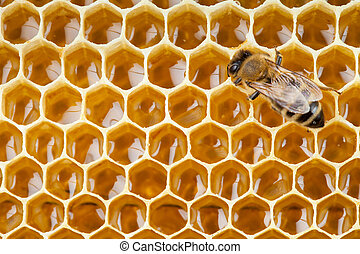 bee macro shot collecting honey in honeycomb