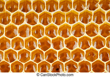 bee honey in honeycomb macro
