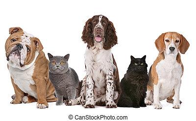 Grupo, gatos, cachorros