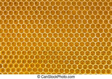 abelha, mel, Favo mel