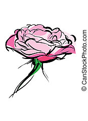 sketch of rose bud on a white background