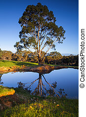 Calmness - Beautiful rural scene in South Australia