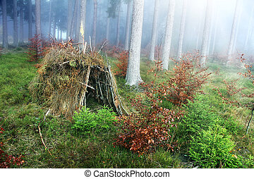 hut  - lonely hut in the forest with fog