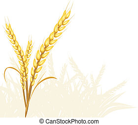 Wheat ears Vector illustration