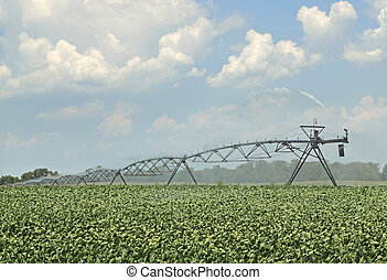 Watering Soybeans - Irrigation equipment watering a crop of...