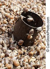 Alot of snails for sale on a market - Living snails for sale...