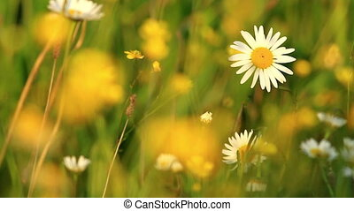 Beautiful wild flowers