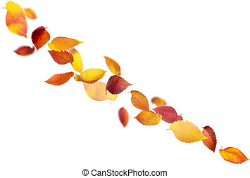 Isolated Falling Leaves - Colorful autumn leaves isolated on...