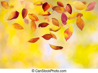 Autumn Leaves - Falling autumn leaves on colorful background