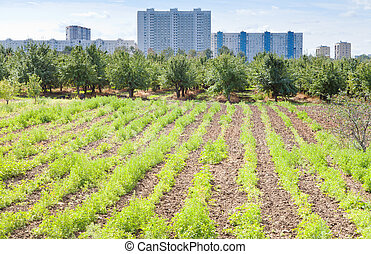 seedbeds in urban garden in summer day