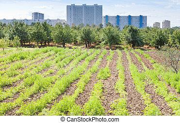 seedbeds in urban garden in summer day
