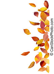 Isolated Falling Leaves - Colorful autumn leaves falling and...