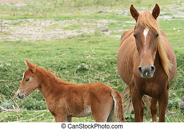 Mare and Colt in a meadow