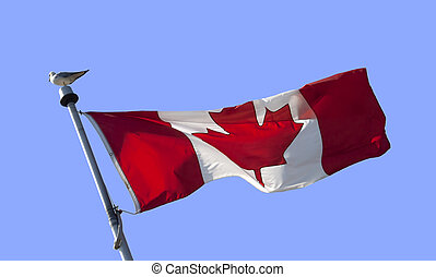 Canadian flag - Red and white Canadian flag with gull bird...