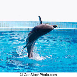 dolphin jumping high from bue water