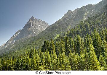 Montagne et for - Montagne de l'ouest canadien bord? par des...