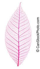 Skeletons of leaves of pink colors .