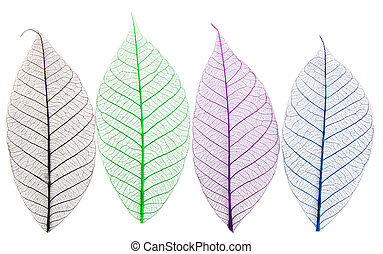 Skeletons of leaves of different colors