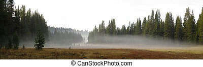 Low-hanging Fog over a Meadow - Panorama of a meadow with...