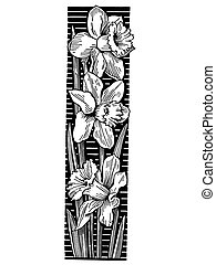 A black and white version of a cluster of Daffodils