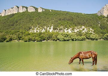 Drinking Horse - Horse drinking in a pond, near the forests...