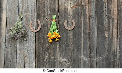 hanging medical herbs on wall - hanging medical herbs on old...