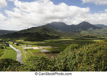 Island farming, Kauai - A valley on the island of Kauai,...