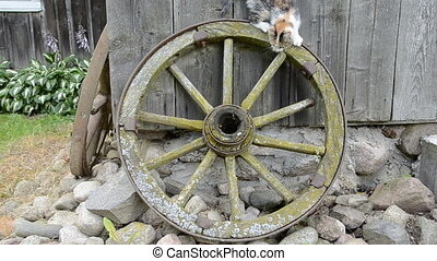 ancient carriage wheel and kitten