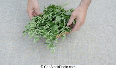 fresh medical lemon-balm herbs on linen cloth