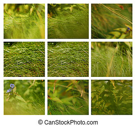 Set of nine grass backgrounds, Nature and Spring Photos