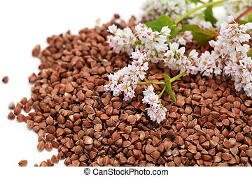 buckwheat seed and flowers - buckwheat seeds and flowers on...